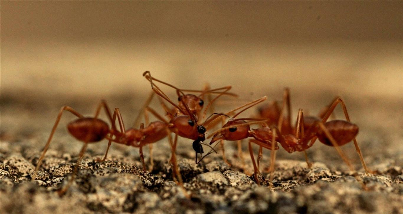 closeup photography ants